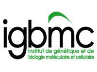 logo-igbmc-600x450